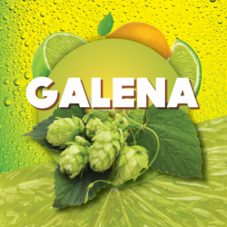 Houblons en cônes Galena 100 g