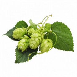 Hops Brewers Gold 100 g