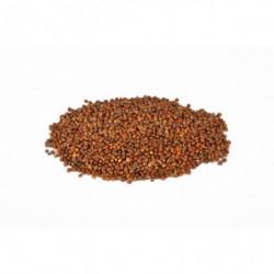Grains of paradise 1 kg
