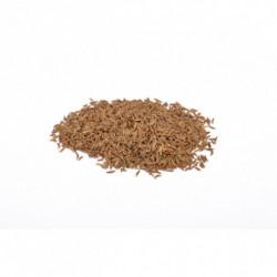 Carvi semences 100 g
