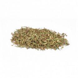 Renouée herbe coupée 50 g
